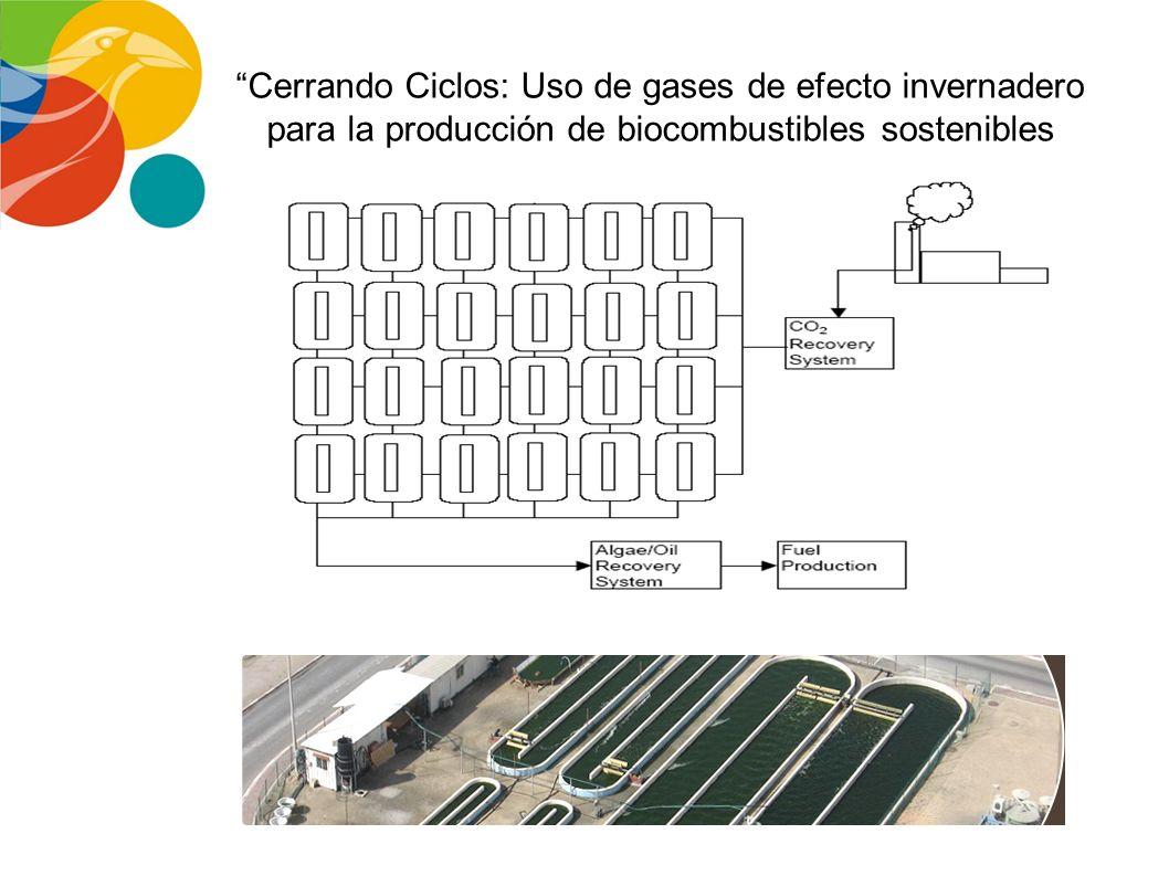 Cerrando Ciclos: Uso de gases de efecto invernadero para la producción de biocombustibles sostenibles