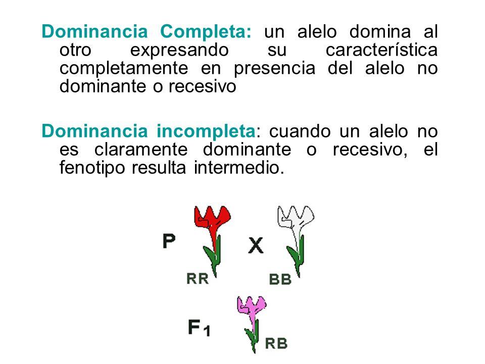Dominancia Completa: un alelo domina al otro expresando su característica completamente en presencia del alelo no dominante o recesivo