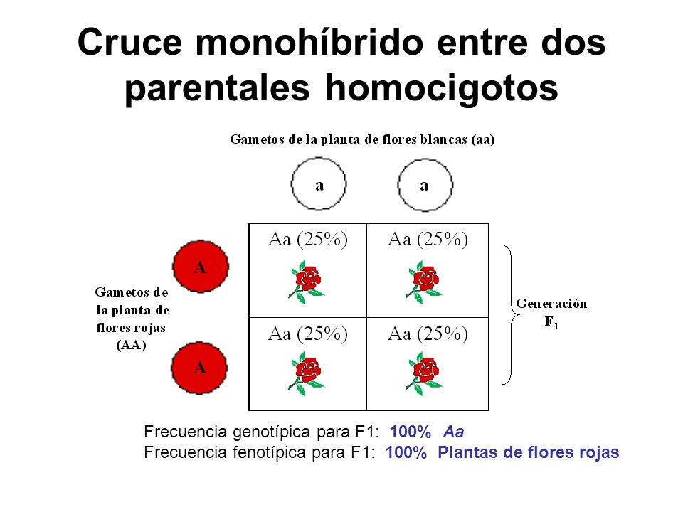 Cruce monohíbrido entre dos parentales homocigotos