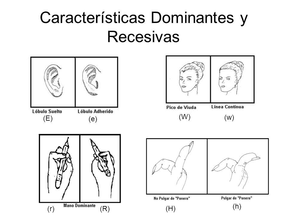 Características Dominantes y Recesivas