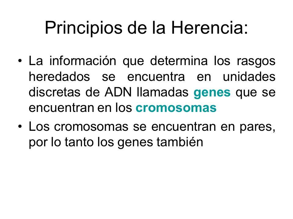 Principios de la Herencia: