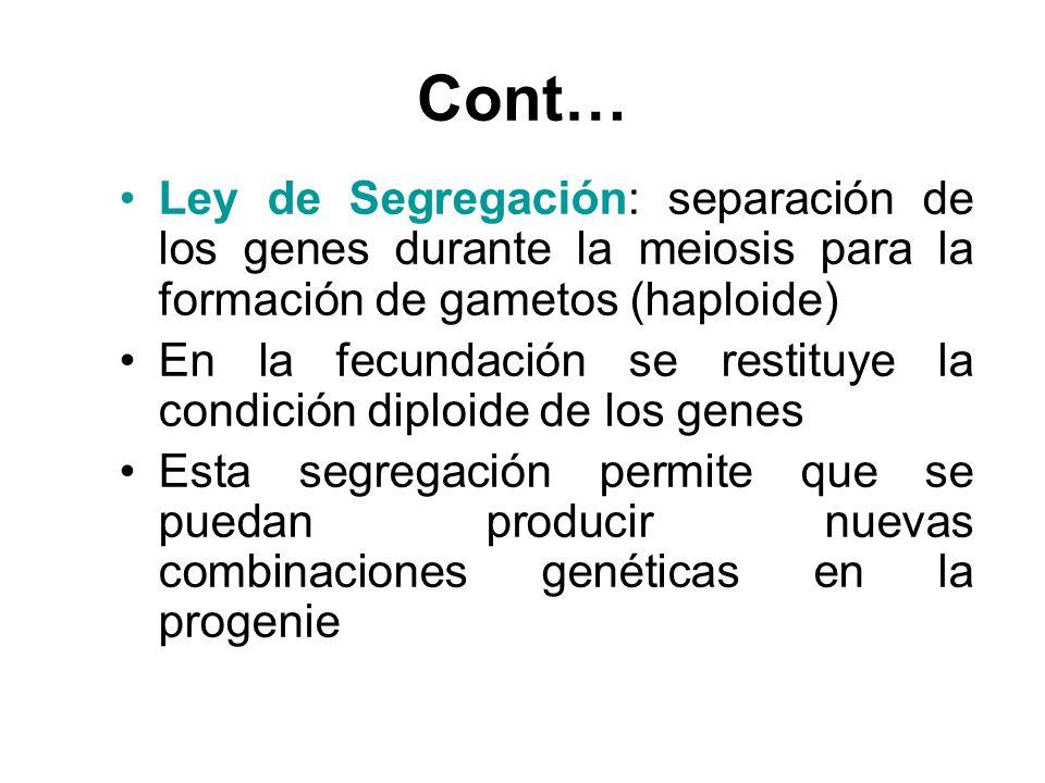 Cont… Ley de Segregación: separación de los genes durante la meiosis para la formación de gametos (haploide)