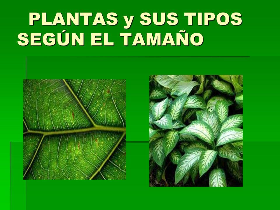 PLANTAS y SUS TIPOS SEGÚN EL TAMAÑO