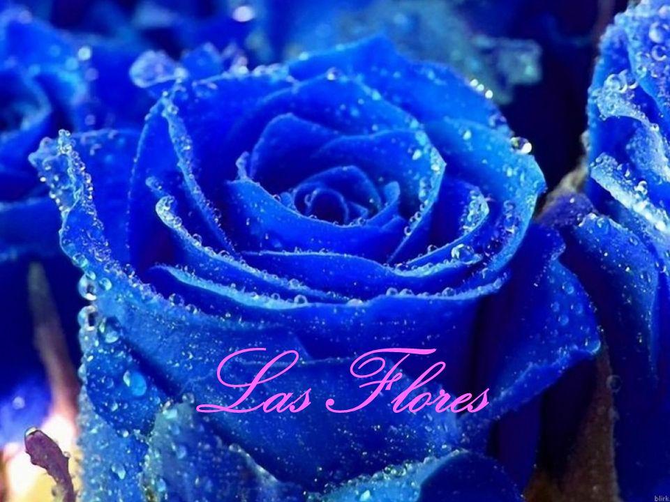 Las FloresSignificados