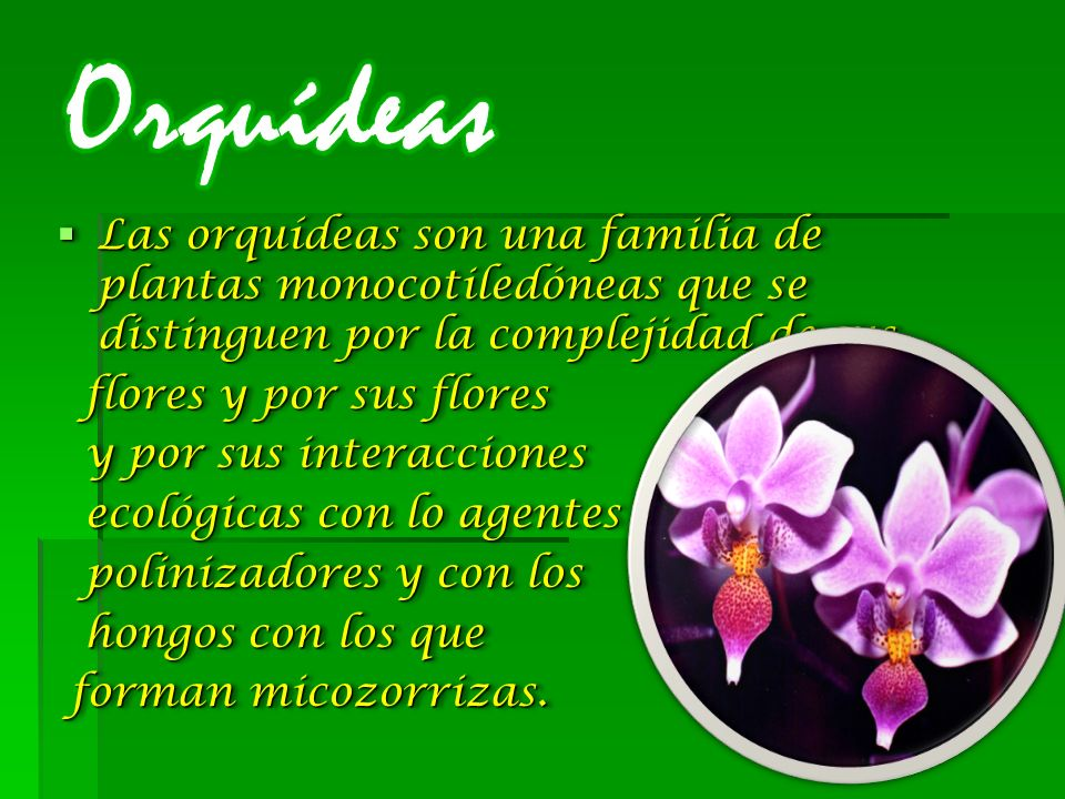 Orquídeas Las orquídeas son una familia de plantas monocotiledóneas que se distinguen por la complejidad de sus.