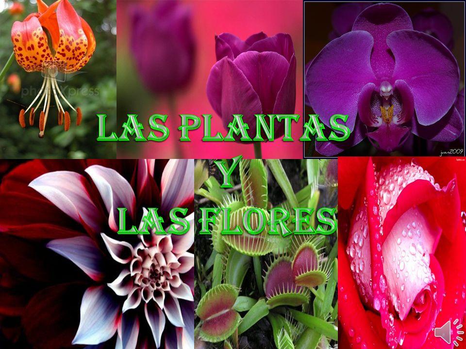 Las Plantas Y Las flores