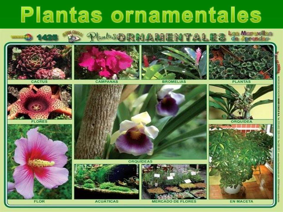 Plantas y sus tipos seg n el tama o ppt descargar for Todas las plantas son ornamentales