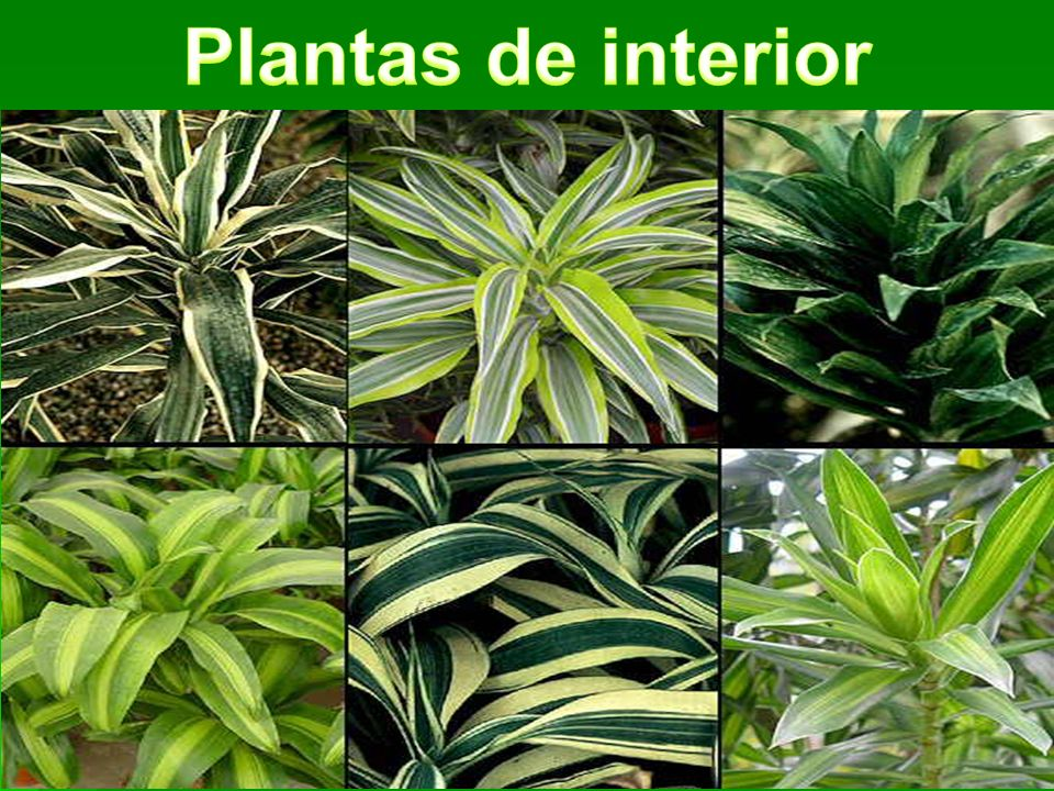 Plantas y sus tipos seg n el tama o ppt descargar - Plantas de interior tipos ...