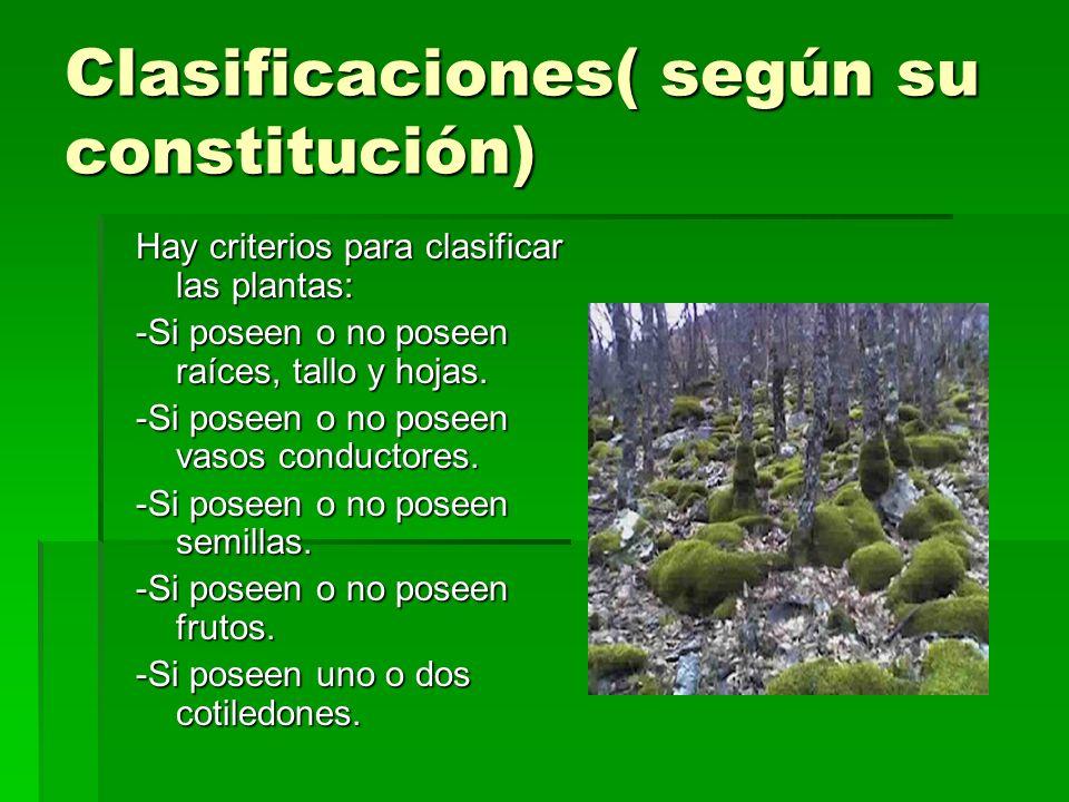 Clasificaciones( según su constitución)