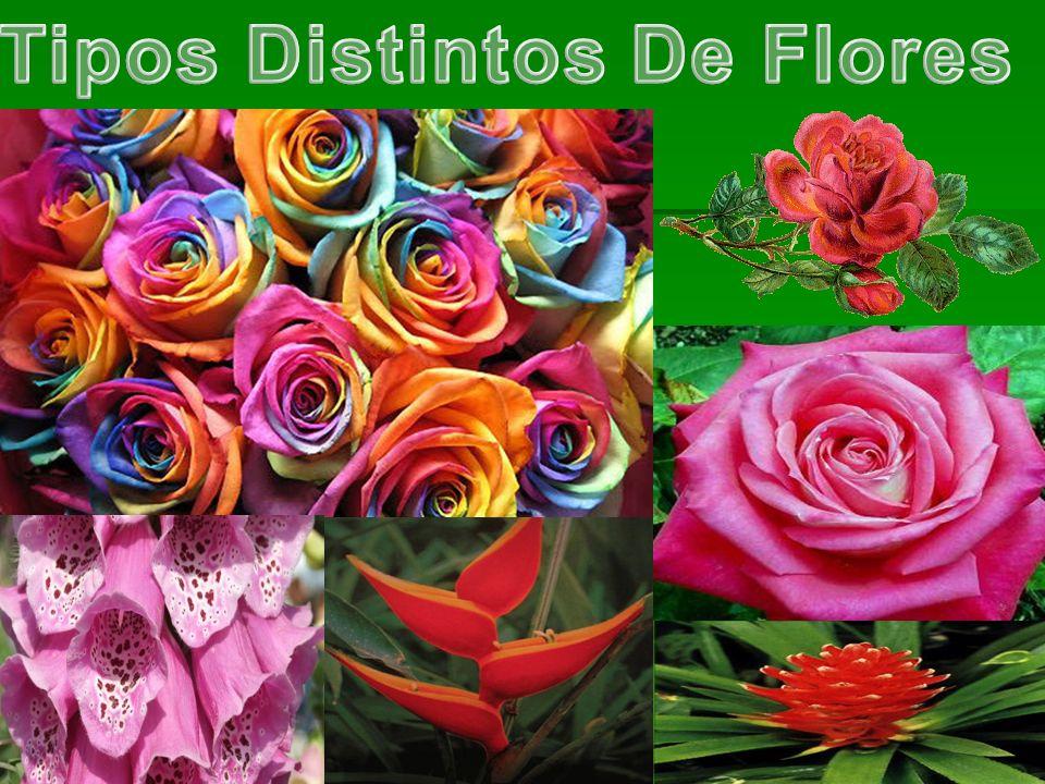 Tipos Distintos De Flores
