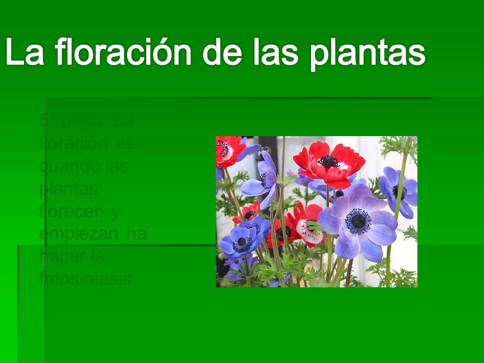 La floración de las plantas