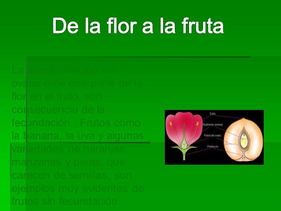 De la flor a la fruta