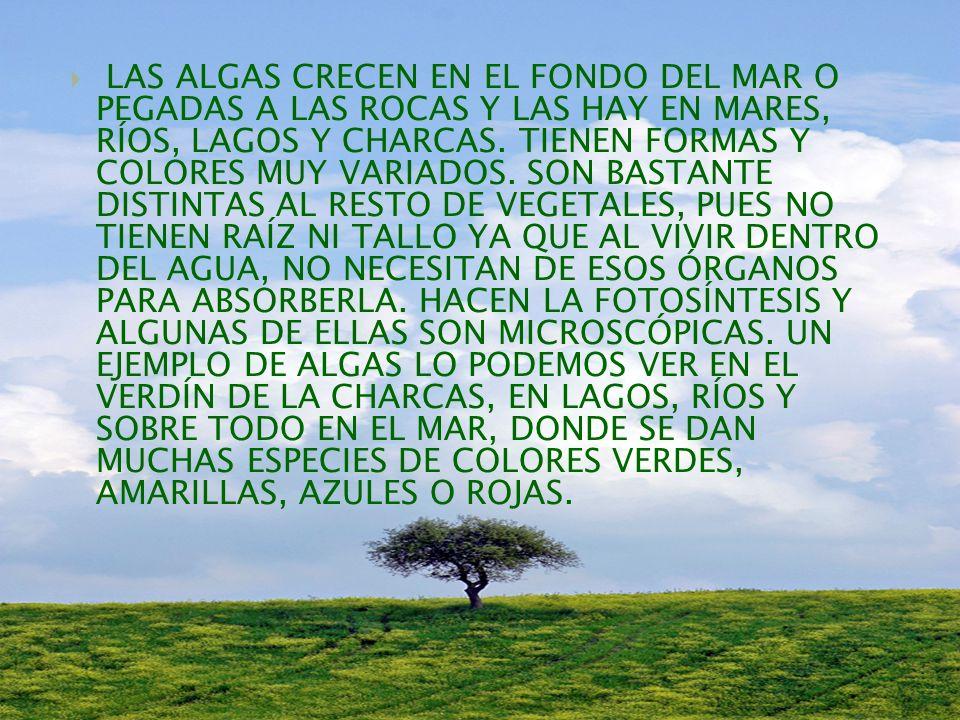 LAS ALGAS CRECEN EN EL FONDO DEL MAR O PEGADAS A LAS ROCAS Y LAS HAY EN MARES, RÍOS, LAGOS Y CHARCAS.