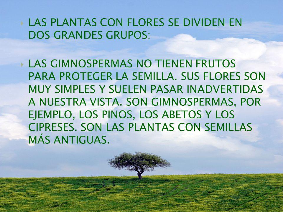 LAS PLANTAS CON FLORES SE DIVIDEN EN DOS GRANDES GRUPOS: