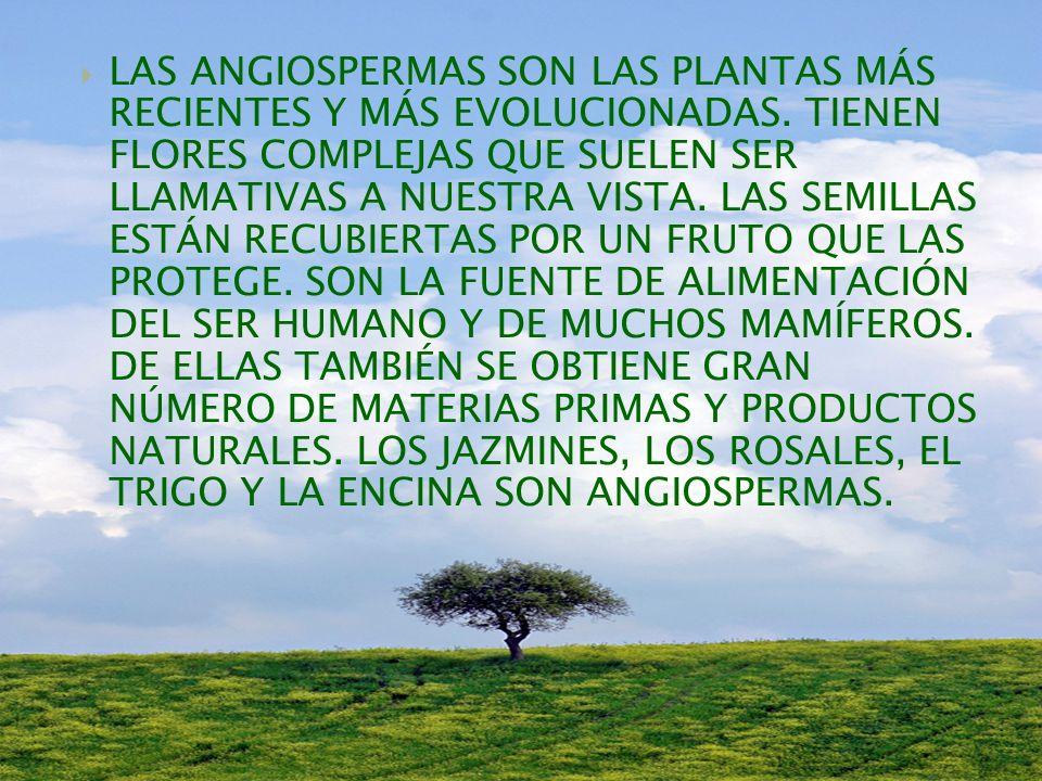 LAS ANGIOSPERMAS SON LAS PLANTAS MÁS RECIENTES Y MÁS EVOLUCIONADAS