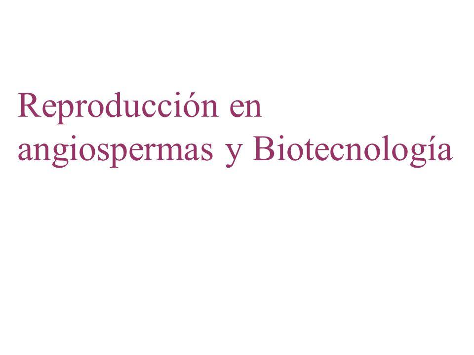 Reproducción en angiospermas y Biotecnología