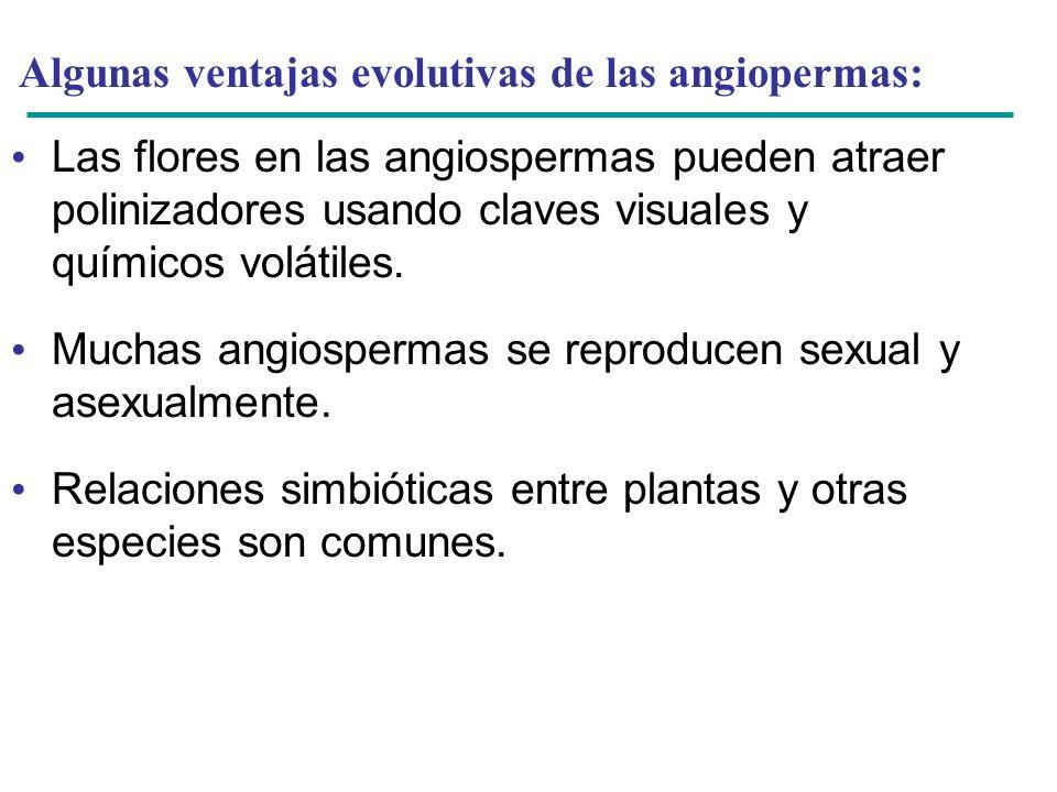 Algunas ventajas evolutivas de las angiopermas: