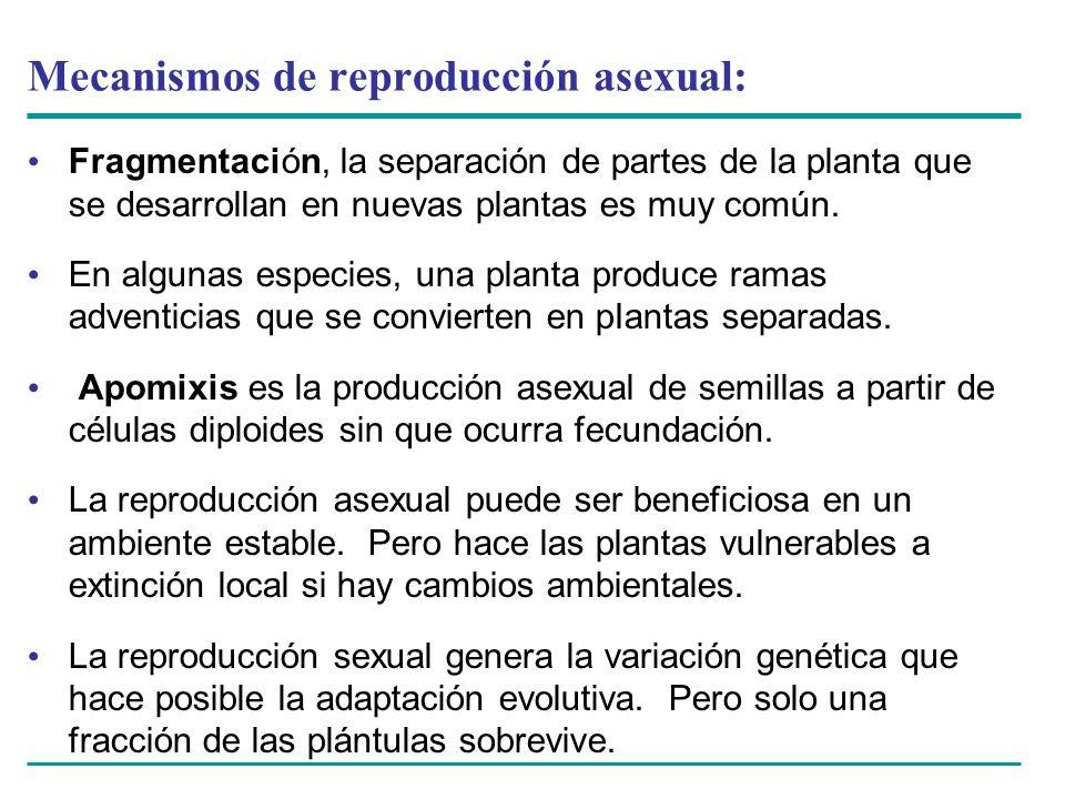 Mecanismos de reproducción asexual: