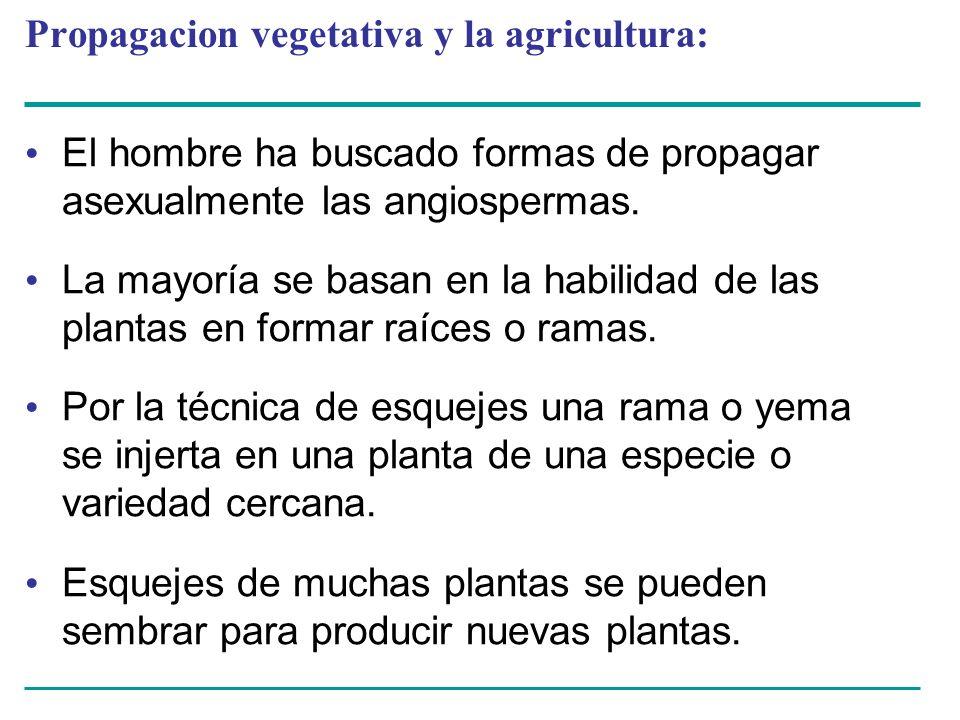 Propagacion vegetativa y la agricultura: