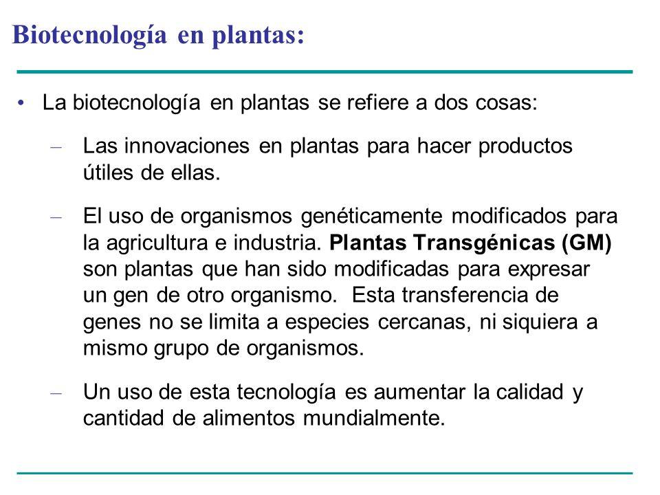Biotecnología en plantas: