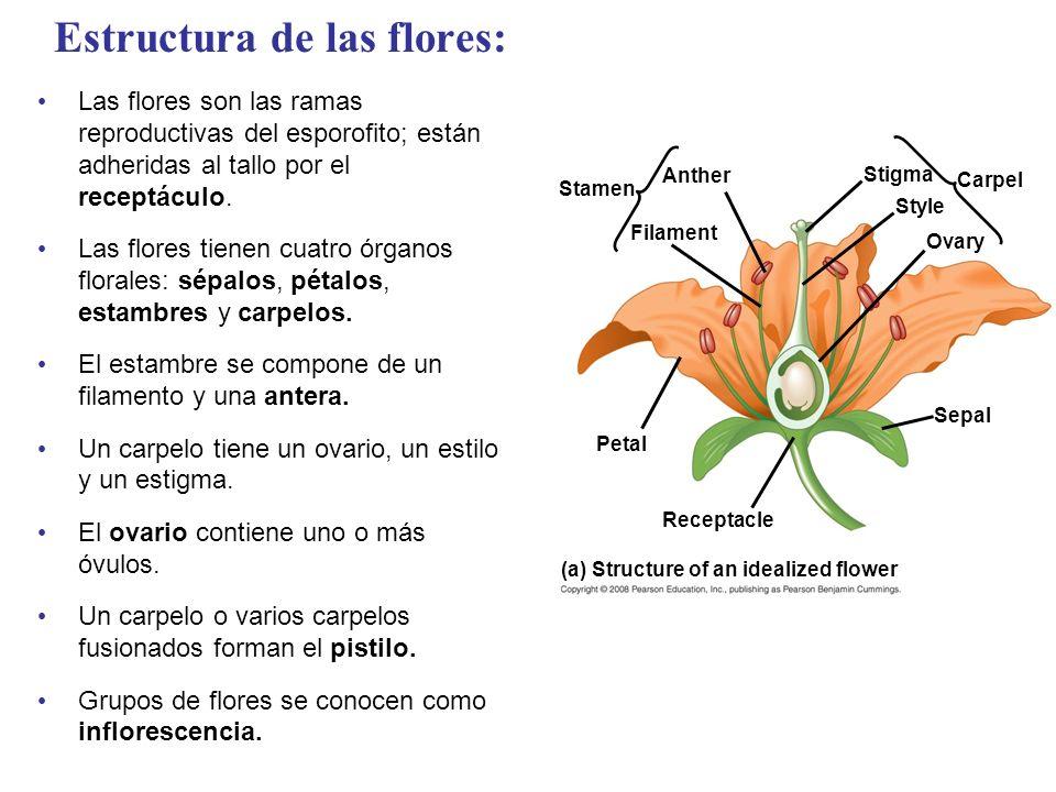 Estructura de las flores: