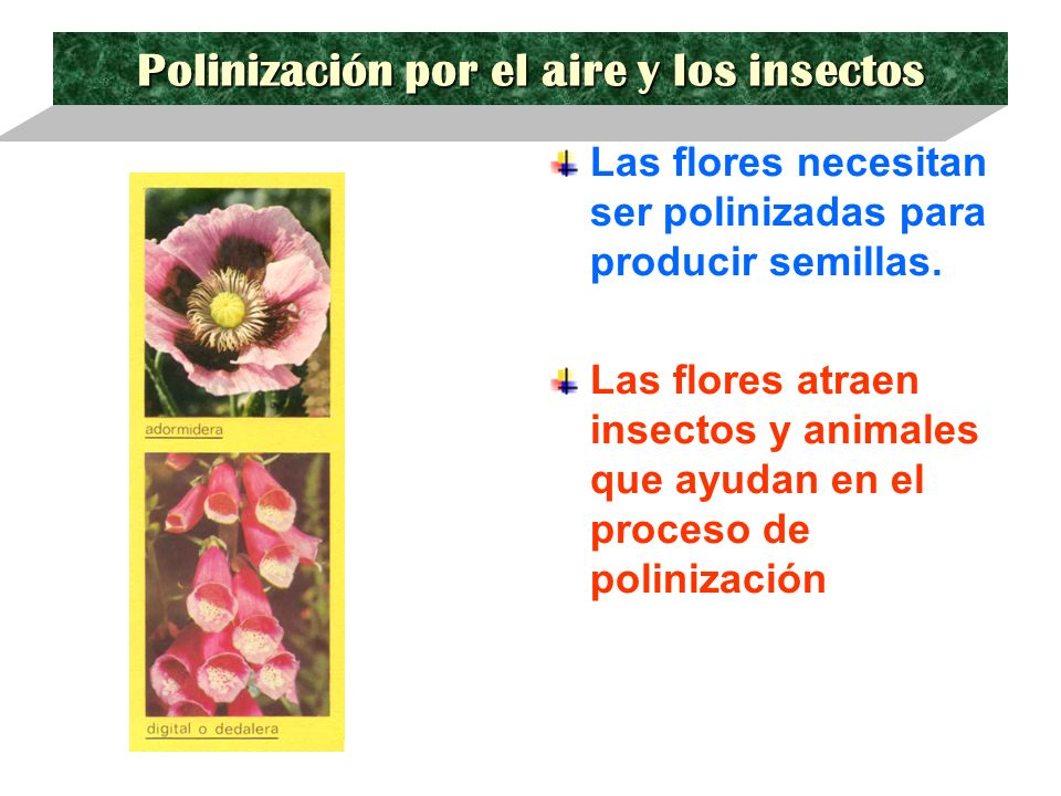 Polinización por el aire y los insectos