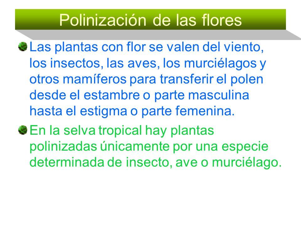 Polinización de las flores