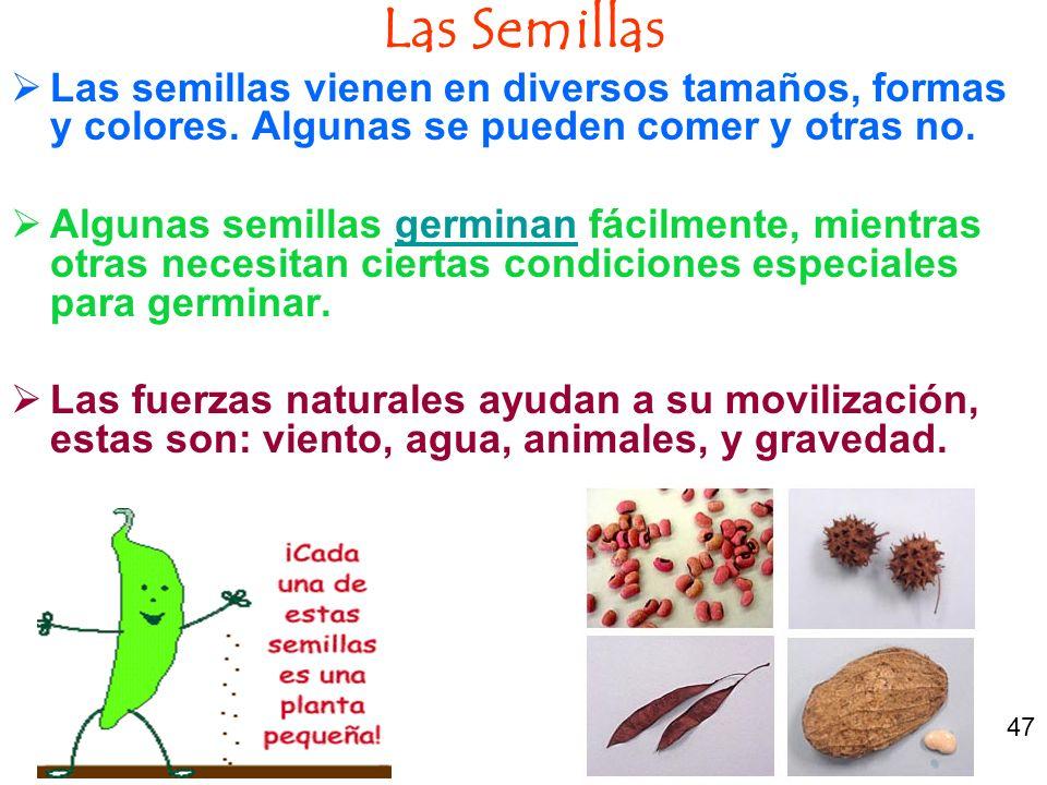 Las Semillas Las semillas vienen en diversos tamaños, formas y colores. Algunas se pueden comer y otras no.