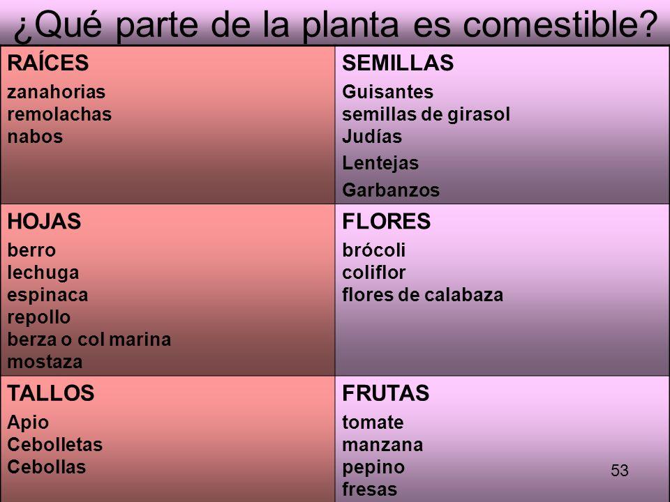 ¿Qué parte de la planta es comestible