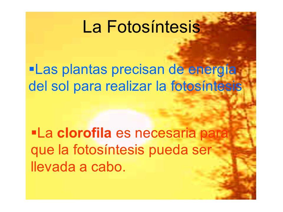 La Fotosíntesis Las plantas precisan de energía del sol para realizar la fotosíntesis.