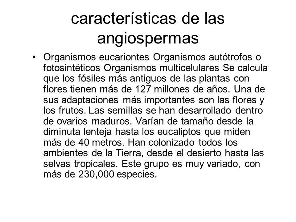 características de las angiospermas