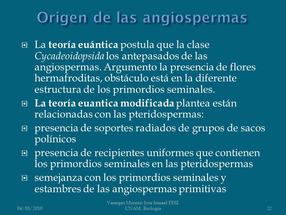 Origen de las angiospermas