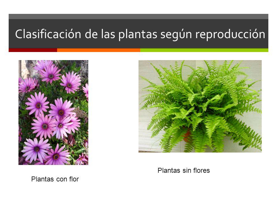 Clasificación de las plantas según reproducción