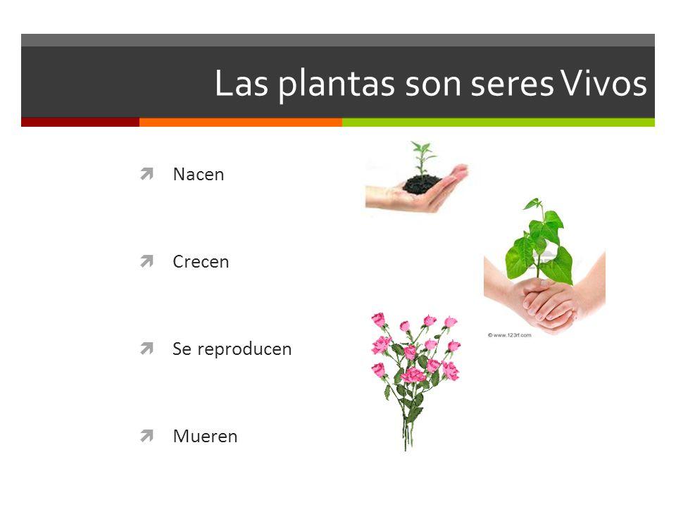 Las plantas son seres Vivos