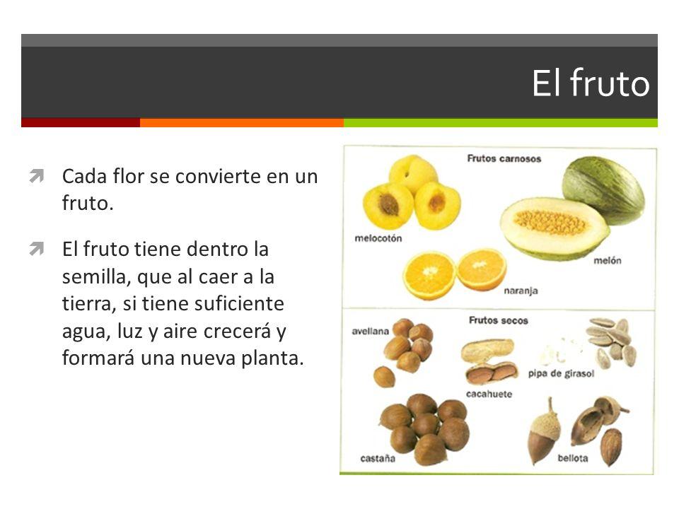 El fruto Cada flor se convierte en un fruto.