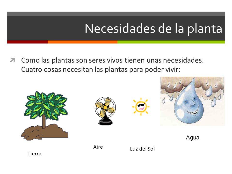 Ciencias naturales 2 b sico ppt video online descargar - Plantas que no necesitan luz ...