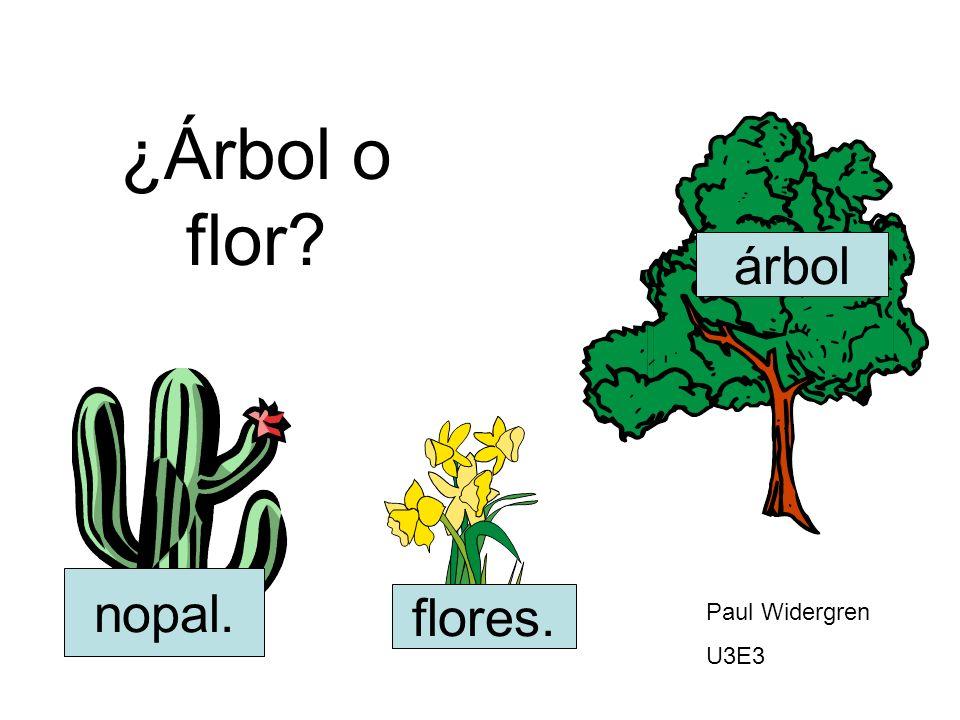 ¿Árbol o flor árbol nopal. flores. Paul Widergren U3E3