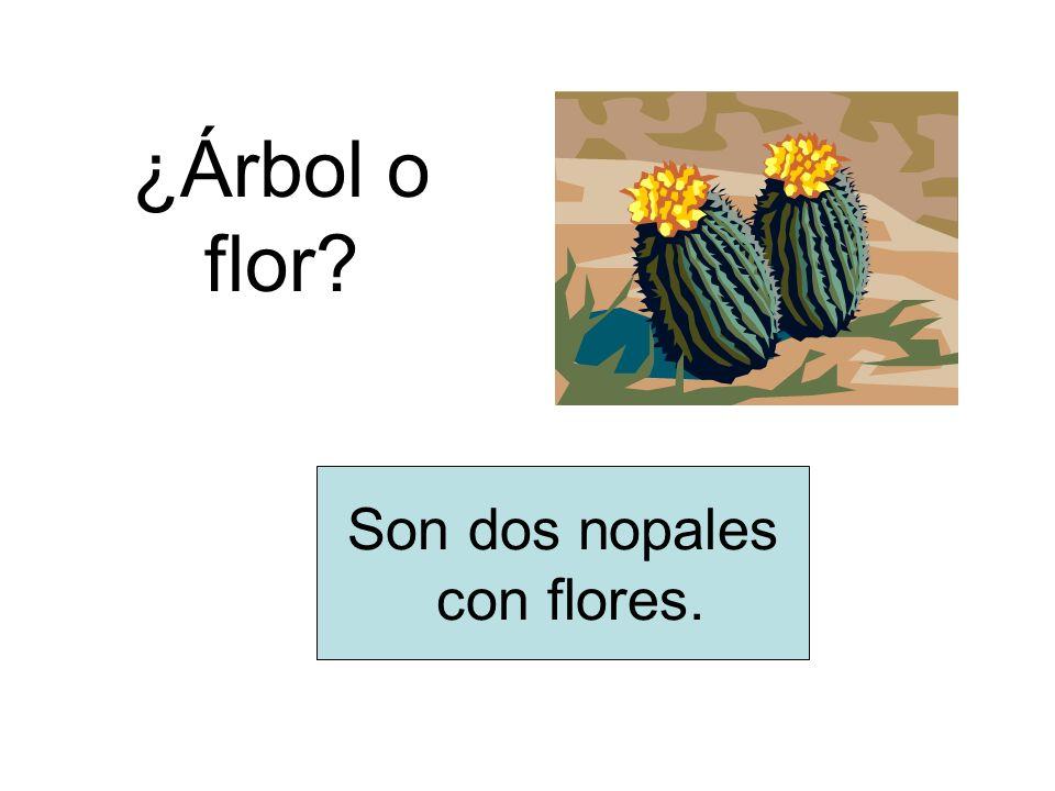 ¿Árbol o flor Son dos nopales con flores.