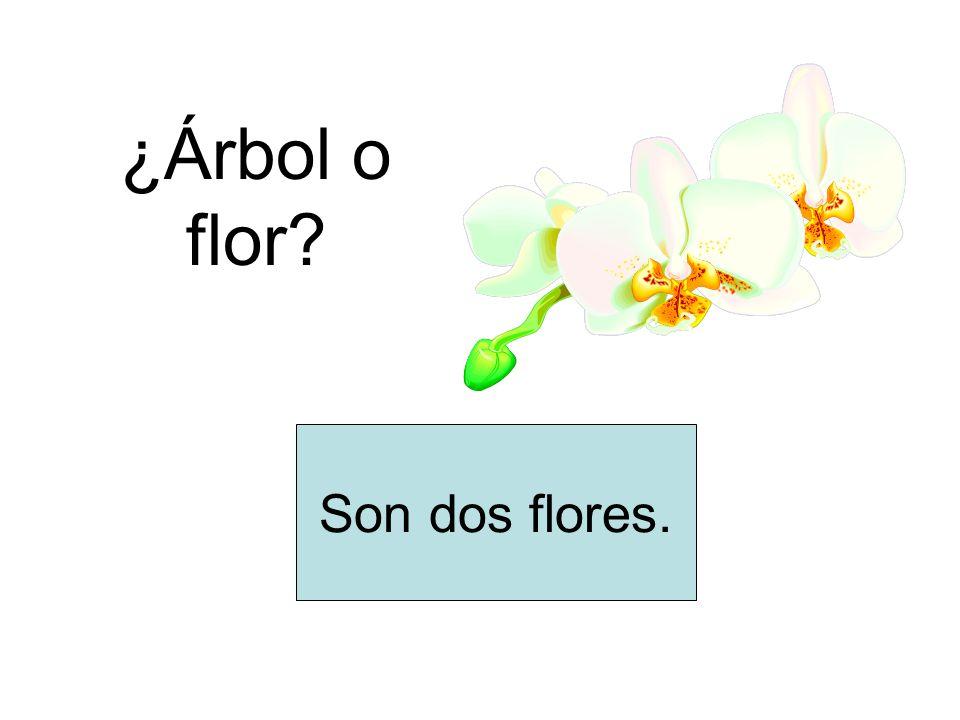 ¿Árbol o flor Son dos flores.