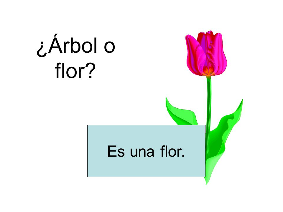 ¿Árbol o flor Es una flor.