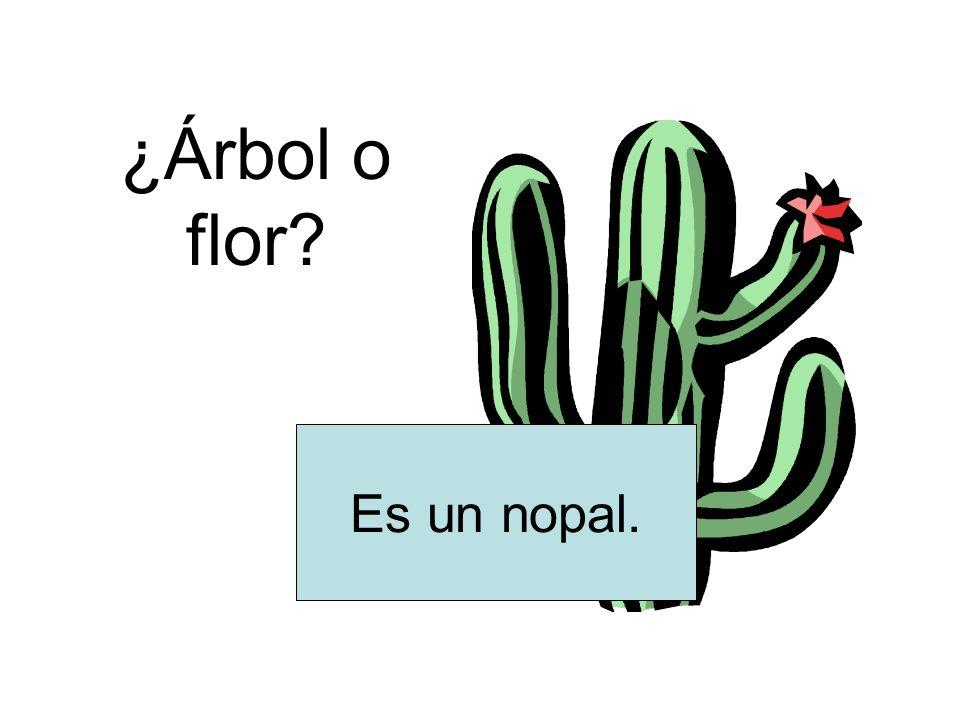 ¿Árbol o flor Es un nopal.