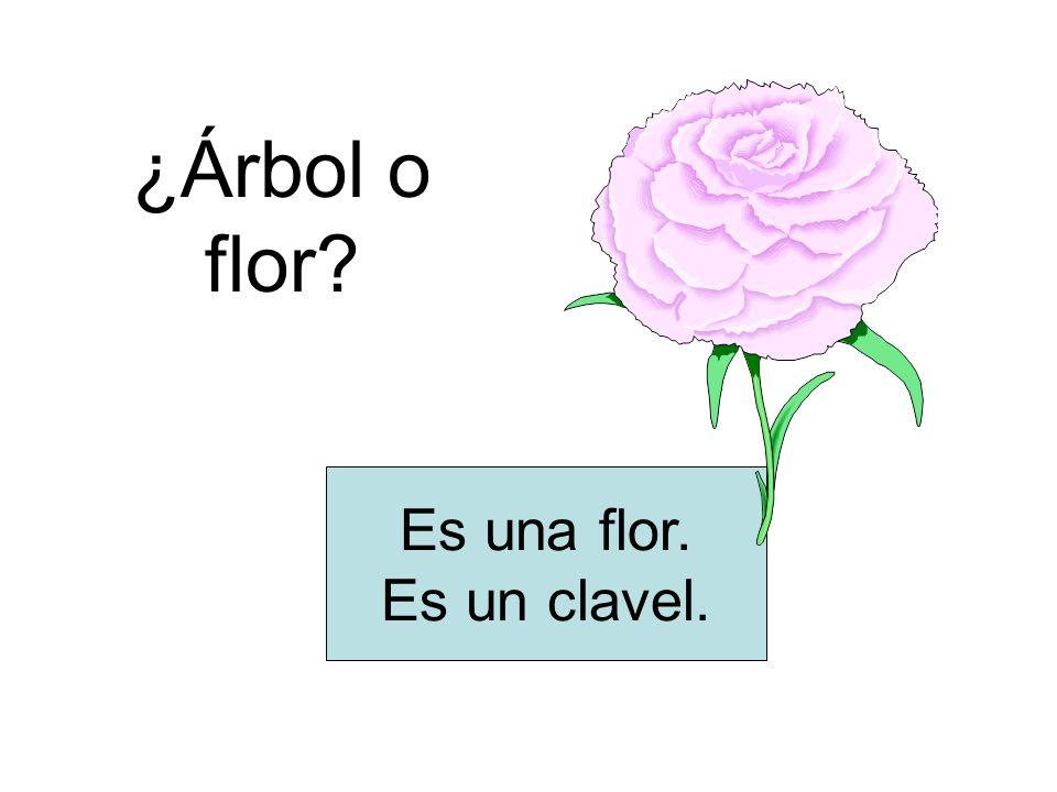 ¿Árbol o flor Es una flor. Es un clavel.