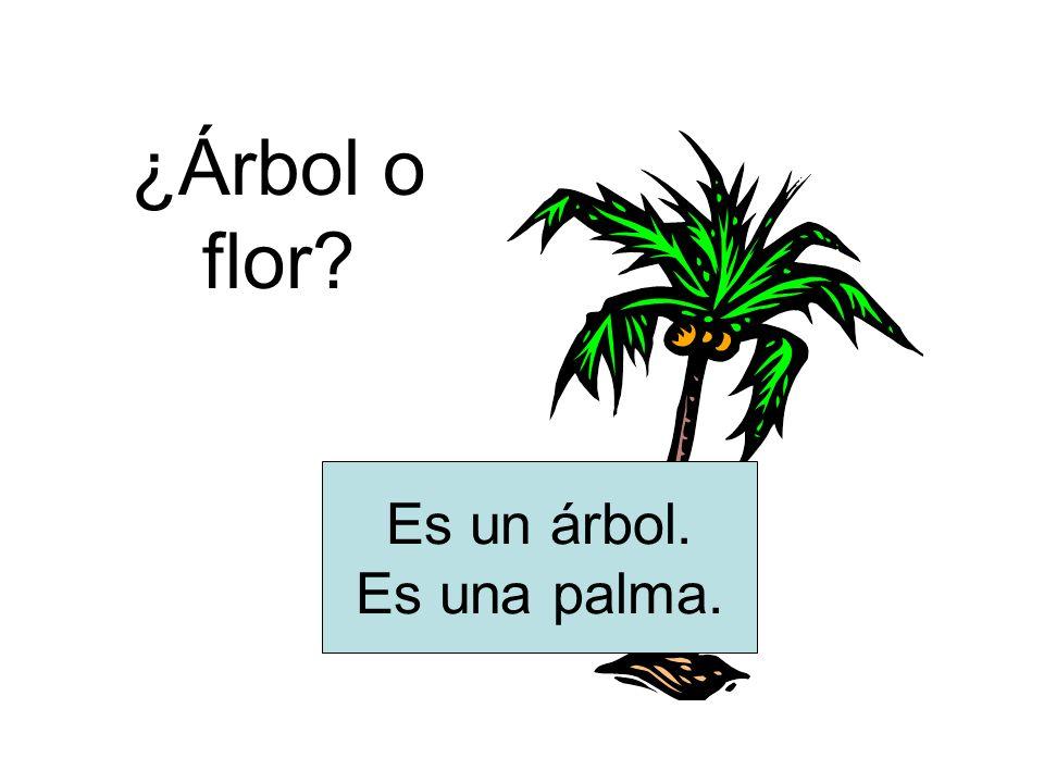 ¿Árbol o flor Es un árbol. Es una palma.