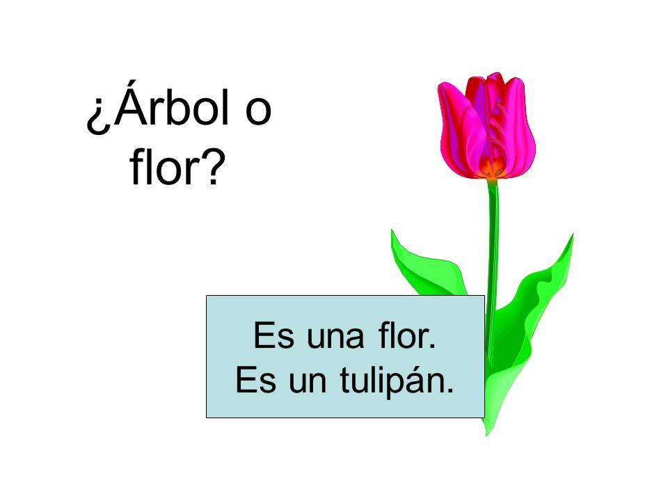 ¿Árbol o flor Es una flor. Es un tulipán.