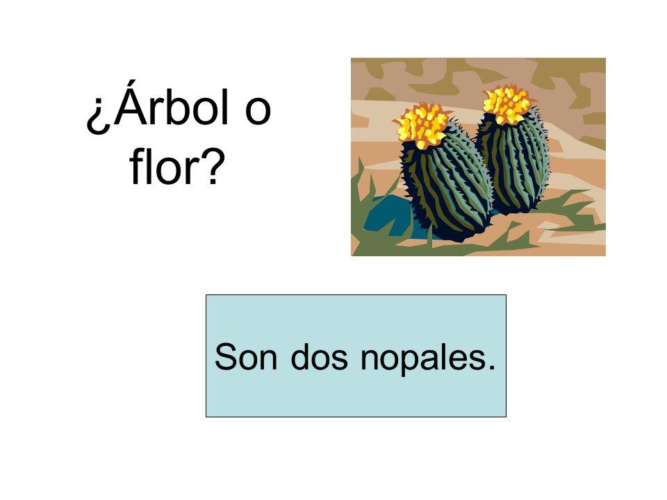 ¿Árbol o flor Son dos nopales.