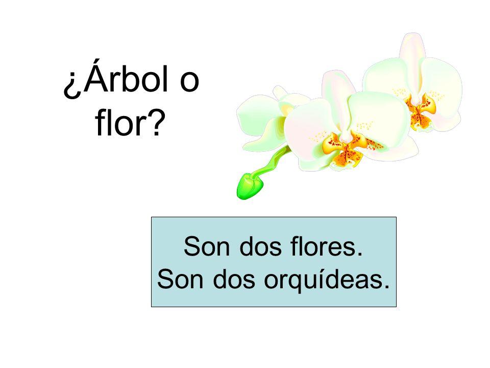 ¿Árbol o flor Son dos flores. Son dos orquídeas.