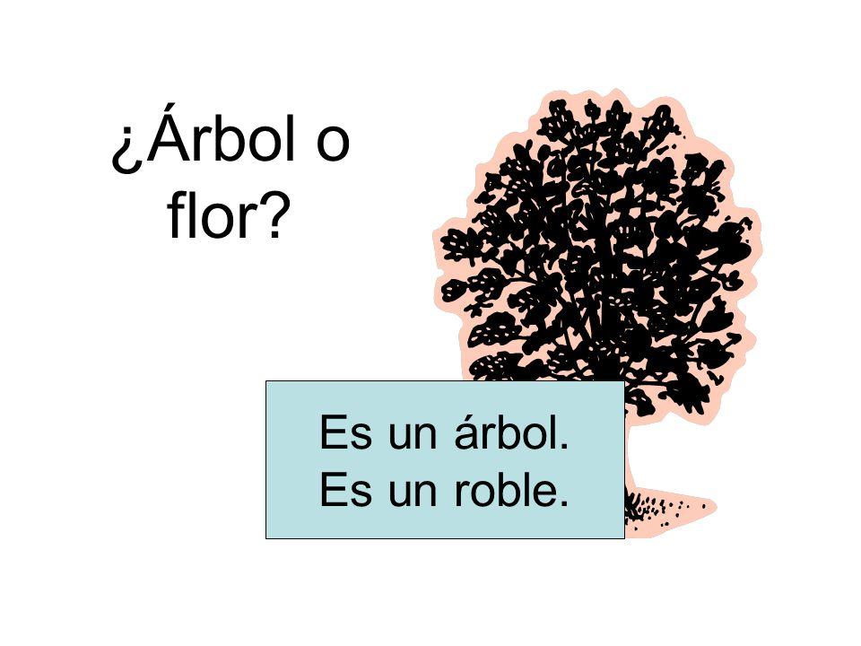 ¿Árbol o flor Es un árbol. Es un roble.