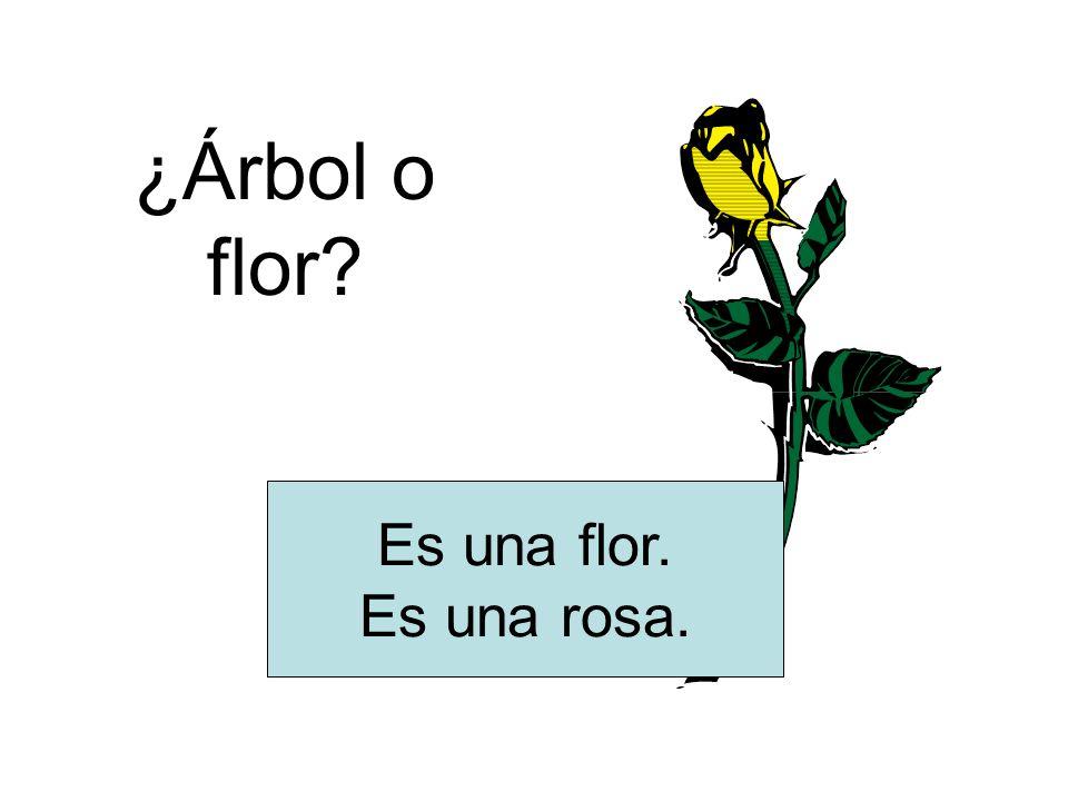¿Árbol o flor Es una flor. Es una rosa.