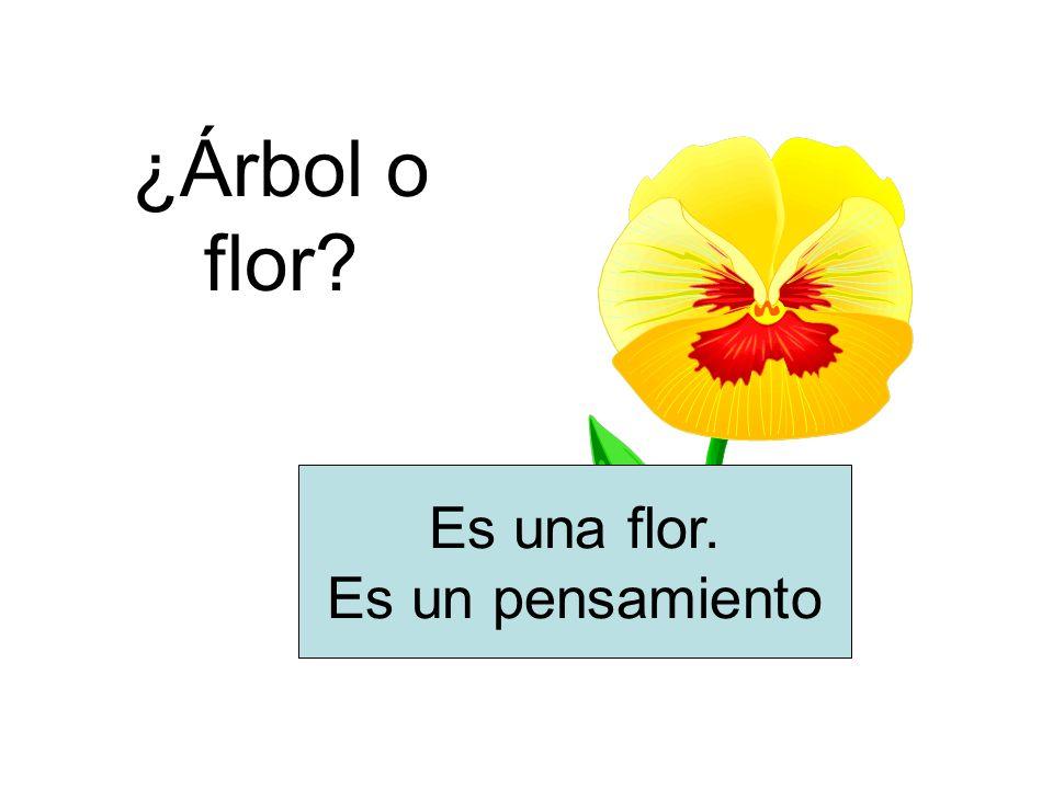 ¿Árbol o flor Es una flor. Es un pensamiento
