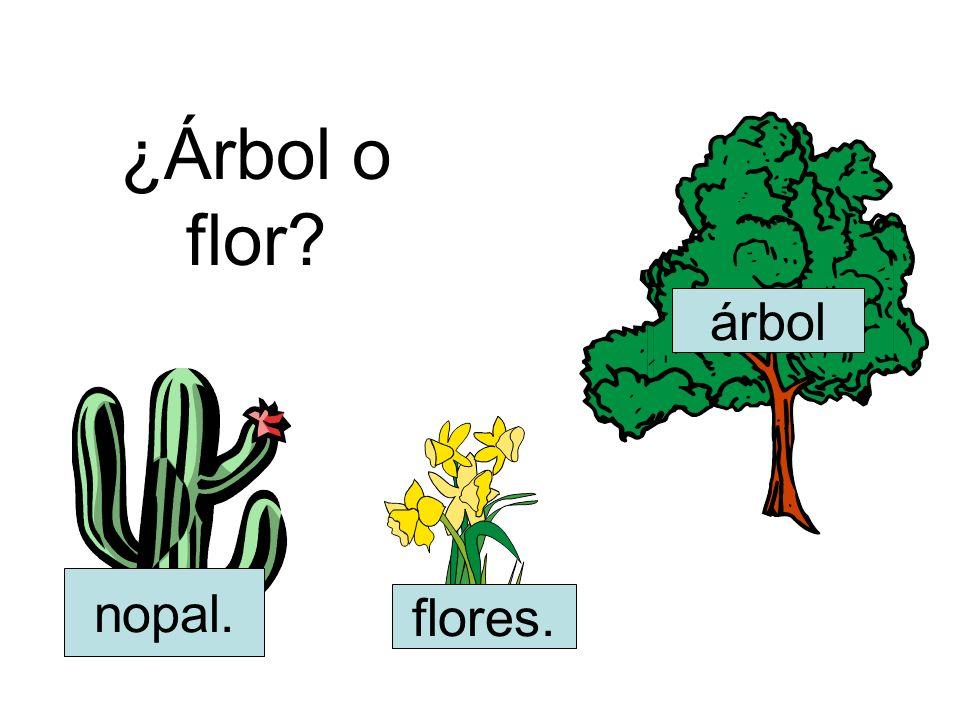 ¿Árbol o flor árbol nopal. flores.